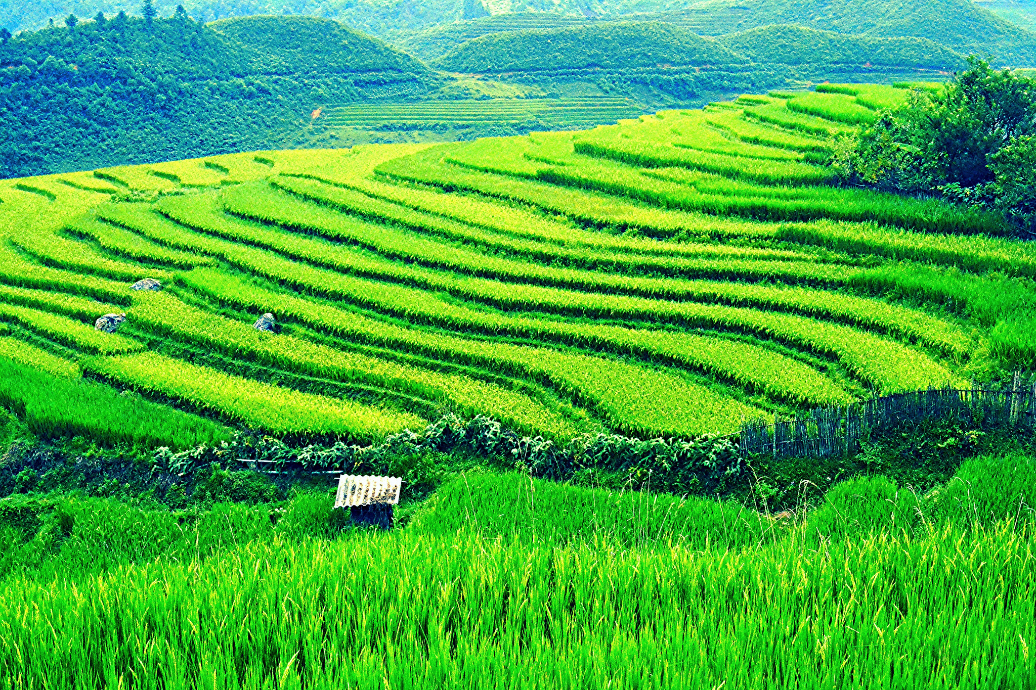 Vietnam, rice paddies | © Loi Nguyen Duc/Flickr