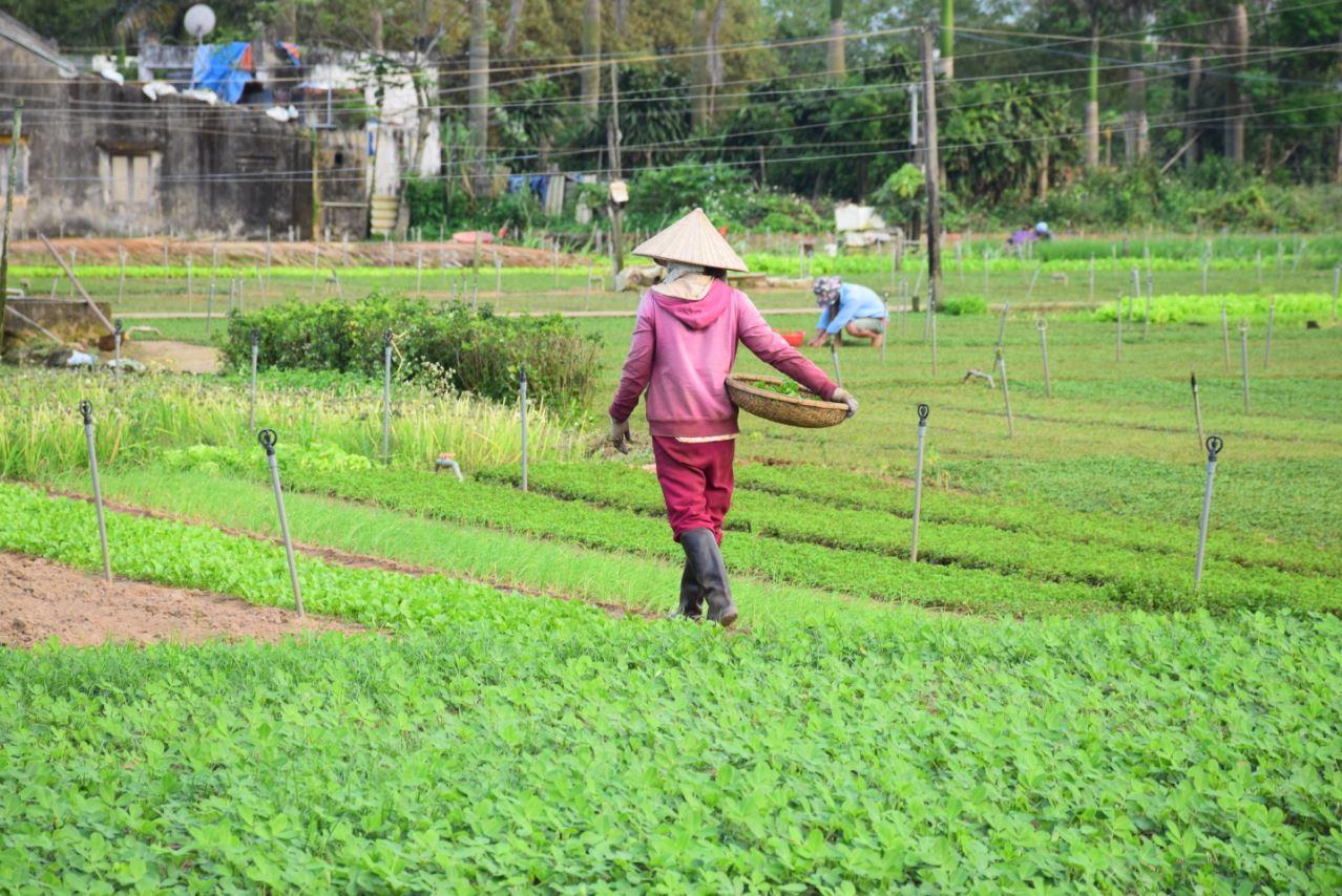 TEFL destination in Vietnam